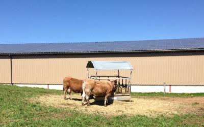 Landwirtschaft – Mit Solarstrom Energiekosten senken